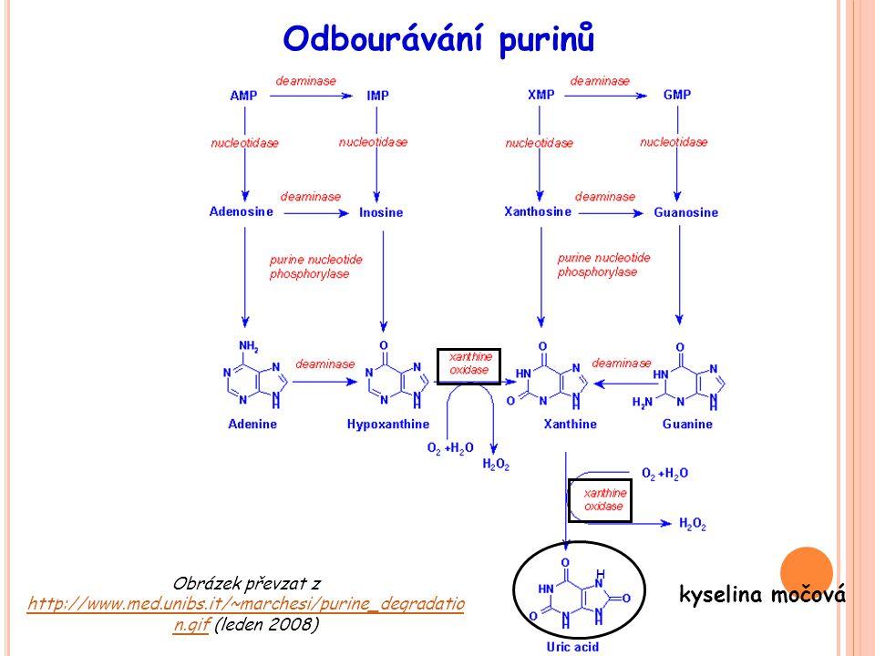 Obrázek převzat z http://www.med.unibs.it/~marchesi/purine_degradatio n.gif (leden 2008) http://www.med.unibs.it/~marchesi/purine_degradatio n.gif Odb