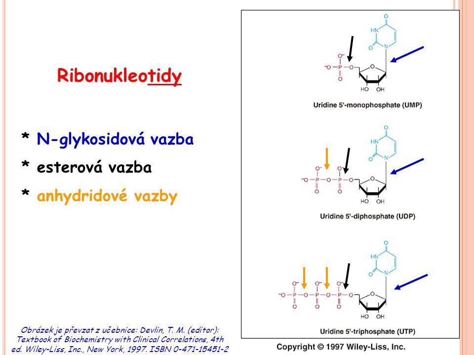R OZDĚLENÍ NUKLEOTIDŮ purinové: obsahují adenin, guanin, hypoxanhin nebo xanthin pyrimidinové: obsahují cytosin, uracil nebo thymin ribonukleotidy (obsahují ribózu) deoxyribonukleotidy (obsahují deoxyribózu)  vznikají redukcí ribonukleosid difosfátů (NADPH)