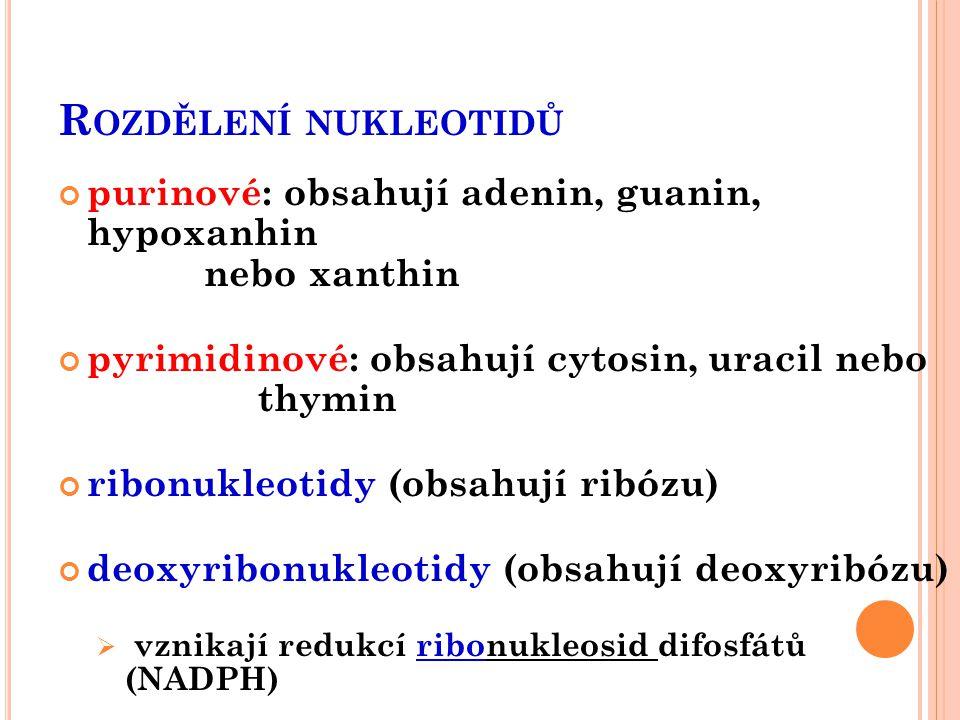 O DBOURÁVÁNÍ PURINŮ A PYRIMIDINŮ z potravy: málo využívané k resyntéze endogenní:  enzymy * nukleázy (štěpí nukleové kyseliny) * nukleotidázy (štěpí nukleotidy) * nukleosidfosforylázy (š.