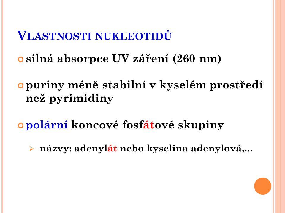 V LASTNOSTI NUKLEOTIDŮ silná absorpce UV záření (260 nm) puriny méně stabilní v kyselém prostředí než pyrimidiny polární koncové fosfátové skupiny  n