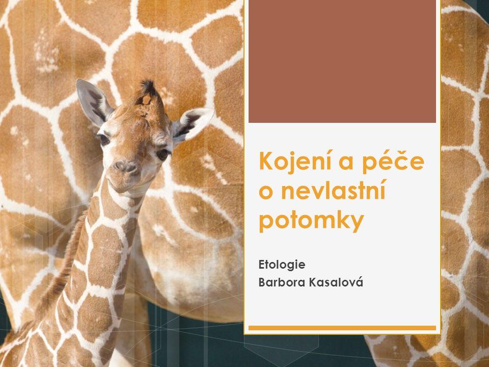 Kojení a péče o nevlastní potomky Etologie Barbora Kasalová