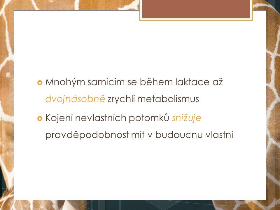 Mnohým samicím se během laktace až dvojnásobně zrychlí metabolismus  Kojení nevlastních potomků snižuje pravděpodobnost mít v budoucnu vlastní