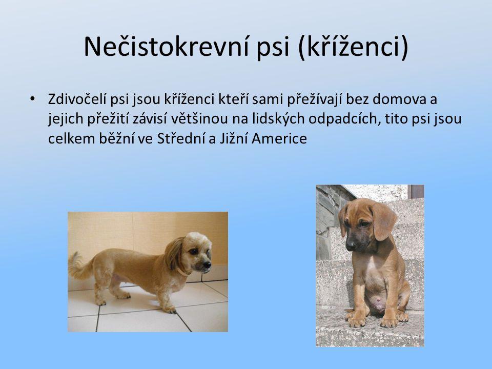 Nečistokrevní psi (kříženci) Zdivočelí psi jsou kříženci kteří sami přežívají bez domova a jejich přežití závisí většinou na lidských odpadcích, tito