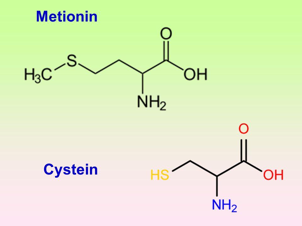 Metionin Cystein