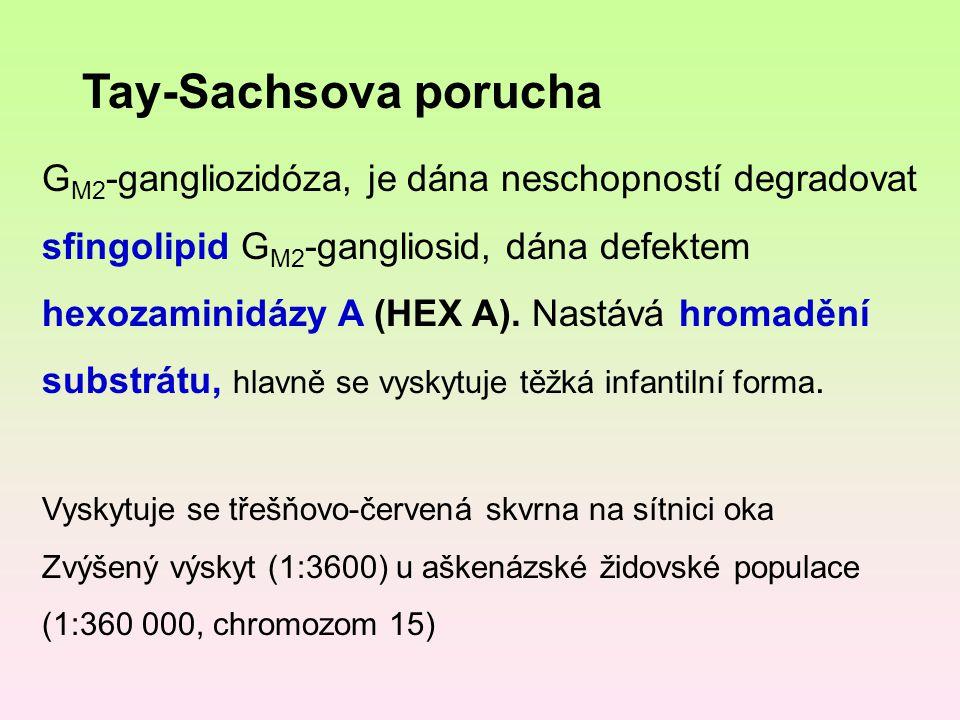 Tay-Sachsova porucha G M2 -gangliozidóza, je dána neschopností degradovat sfingolipid G M2 -gangliosid, dána defektem hexozaminidázy A (HEX A). Nastáv