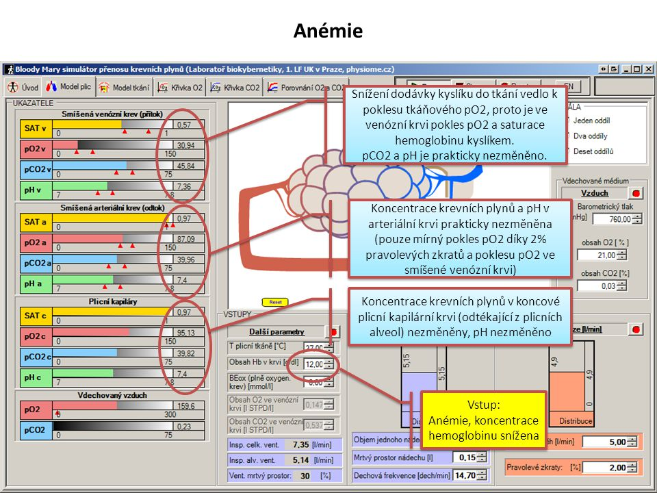 Snížení minutového objemu srdečního Vstup: Pokles minutového objemu srdečního Vstup: Pokles minutového objemu srdečního Koncentrace krevních plynů v koncové plicní kapilární krvi (odtékající z plicních alveol) prakticky nezměněny, pH nezměněno Koncentrace krevních plynů a pH v arteriální krvi prakticky nezměněna (pouze mírný pokles pO2 a saturace hemoglobinu kyslíkem) díky 2% pravolevých zkratů a poklesu pO2 ve smíšené venózní krvi) Snížení dodávky kyslíku do tkání vedlo k poklesu tkáňového pO2, proto je ve venózní krvi pokles pO2 a saturace hemoglobinu kyslíkem.