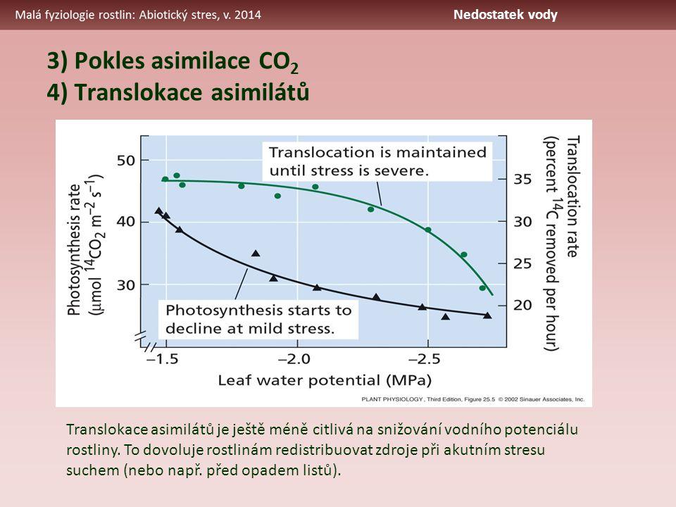 3) Pokles asimilace CO 2 4) Translokace asimilátů Translokace asimilátů je ještě méně citlivá na snižování vodního potenciálu rostliny. To dovoluje ro