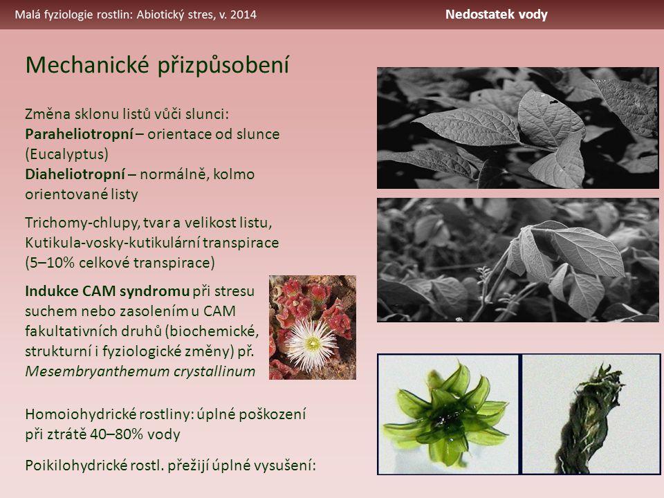 Změna sklonu listů vůči slunci: Paraheliotropní – orientace od slunce (Eucalyptus) Diaheliotropní – normálně, kolmo orientované listy Trichomy-chlupy, tvar a velikost listu, Kutikula-vosky-kutikulární transpirace (5–10% celkové transpirace) Indukce CAM syndromu při stresu suchem nebo zasolením u CAM fakultativních druhů (biochemické, strukturní i fyziologické změny) př.