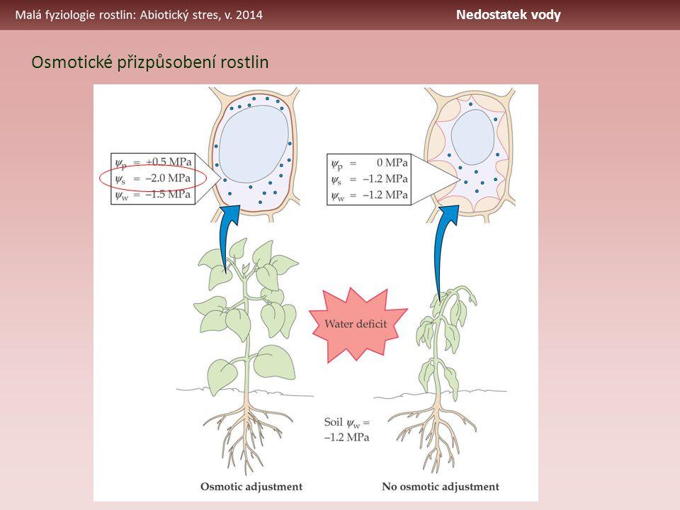Osmotické přizpůsobení rostlin Nedostatek vody