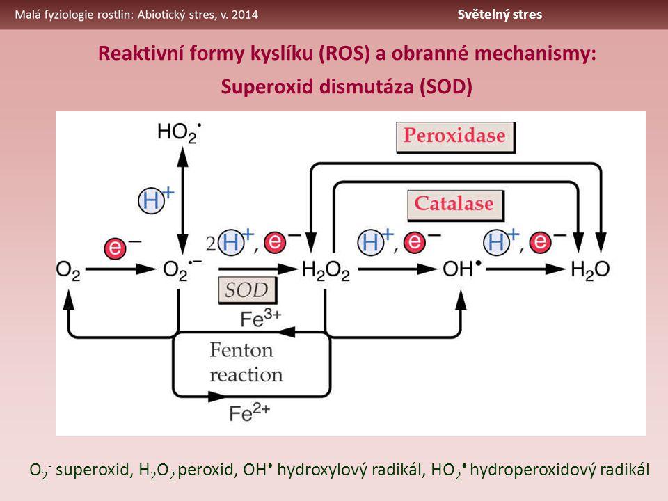 Reaktivní formy kyslíku (ROS) a obranné mechanismy: Superoxid dismutáza (SOD) O 2 - superoxid, H 2 O 2 peroxid, OH hydroxylový radikál, HO 2 hydroperoxidový radikál Světelný stres