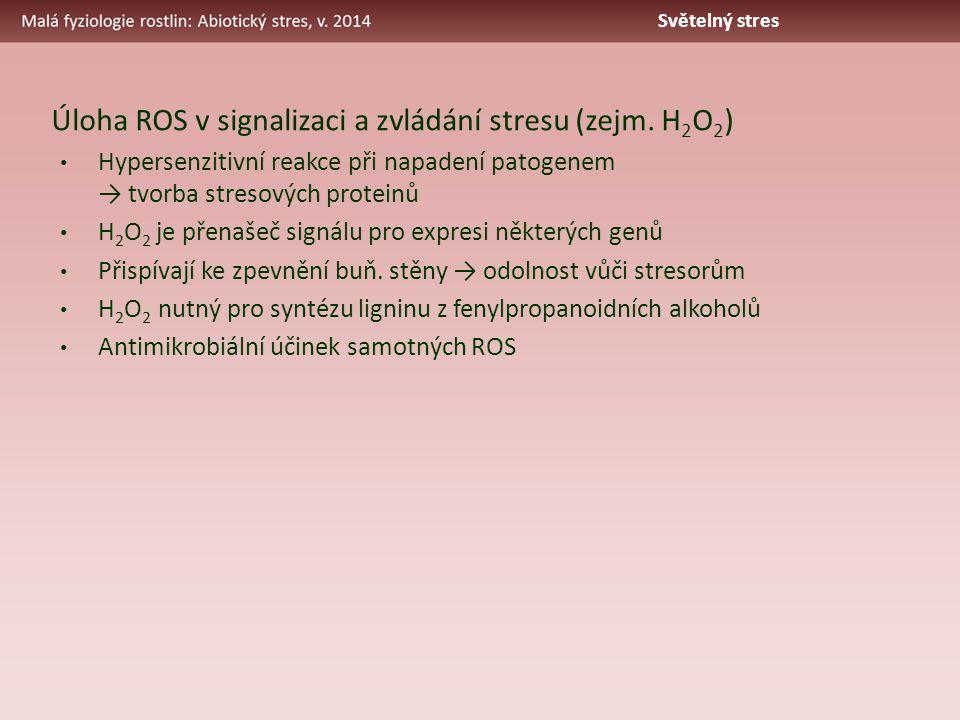 Úloha ROS v signalizaci a zvládání stresu (zejm. H 2 O 2 ) Hypersenzitivní reakce při napadení patogenem → tvorba stresových proteinů H 2 O 2 je přena