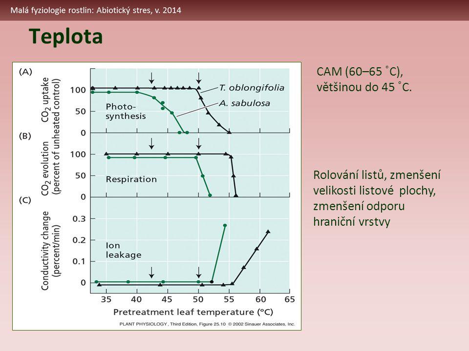 Teplota CAM (60–65 ˚C), většinou do 45 ˚C. Rolování listů, zmenšení velikosti listové plochy, zmenšení odporu hraniční vrstvy