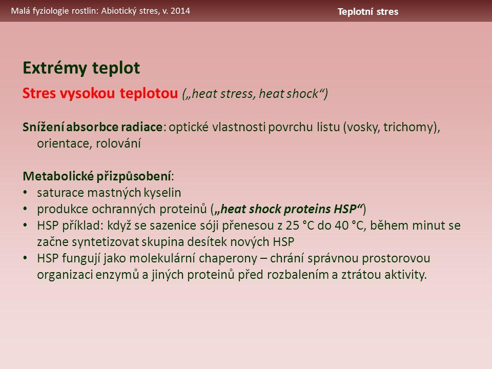 """Stres vysokou teplotou (""""heat stress, heat shock"""") Snížení absorbce radiace: optické vlastnosti povrchu listu (vosky, trichomy), orientace, rolování M"""
