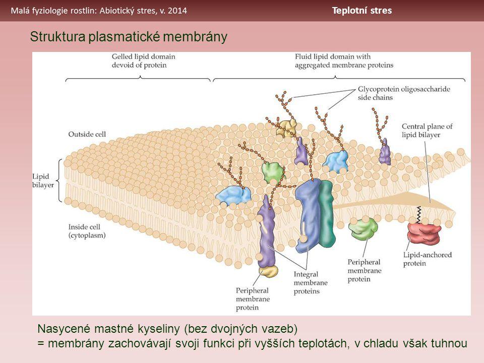 Struktura plasmatické membrány Nasycené mastné kyseliny (bez dvojných vazeb) = membrány zachovávají svoji funkci při vyšších teplotách, v chladu však tuhnou Teplotní stres