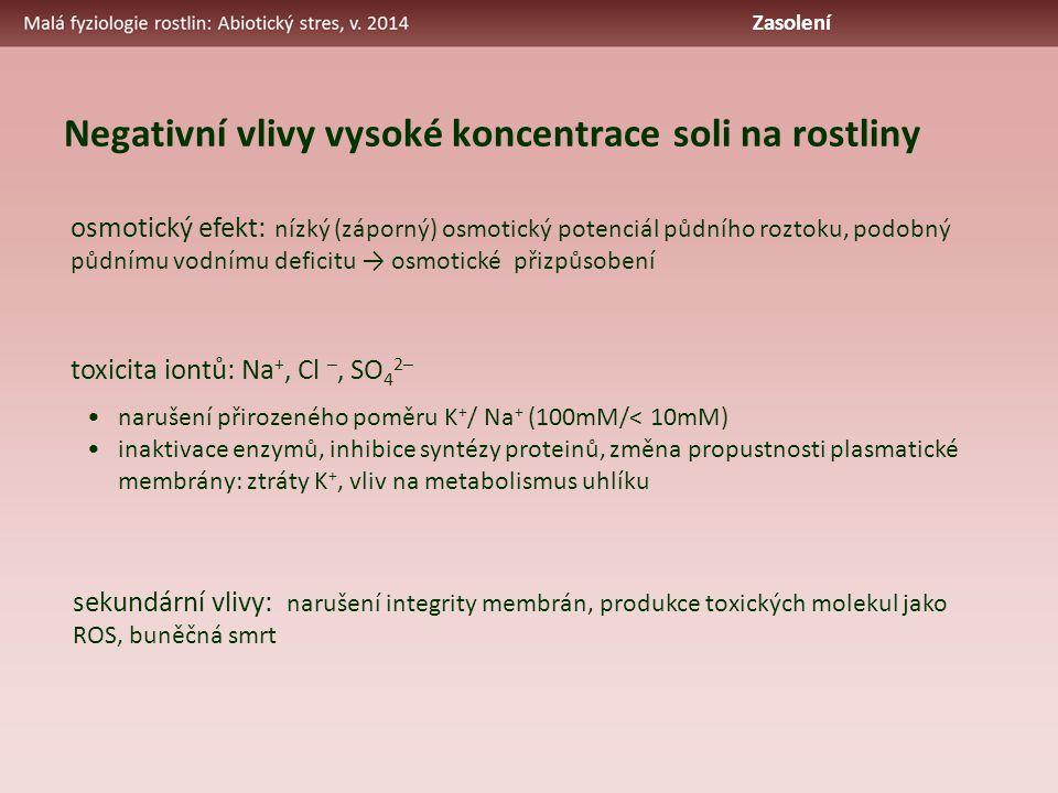 Negativní vlivy vysoké koncentrace soli na rostliny osmotický efekt: nízký (záporný) osmotický potenciál půdního roztoku, podobný půdnímu vodnímu deficitu → osmotické přizpůsobení toxicita iontů: Na +, Cl –, SO 4 2– narušení přirozeného poměru K + / Na + (100mM/< 10mM) inaktivace enzymů, inhibice syntézy proteinů, změna propustnosti plasmatické membrány: ztráty K +, vliv na metabolismus uhlíku sekundární vlivy: narušení integrity membrán, produkce toxických molekul jako ROS, buněčná smrt Zasolení