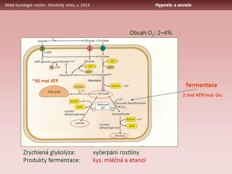 ~30 mol ATP 2 mol ATP/mol Glu fermentace Zrychlená glykolýza:vyčerpání rostliny Produkty fermentace:kys. mléčná a etanol Obsah O 2 : 2–4% Hypoxie a an