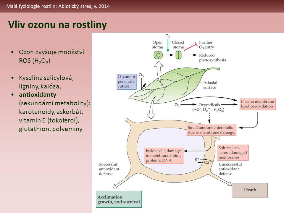 Vliv ozonu na rostliny Ozon zvyšuje množství ROS (H 2 O 2 ) Kyselina salicylová, ligniny, kalóza, antioxidanty (sekundární metabolity): karotenoidy, askorbát, vitamin E (tokoferol), glutathion, polyaminy