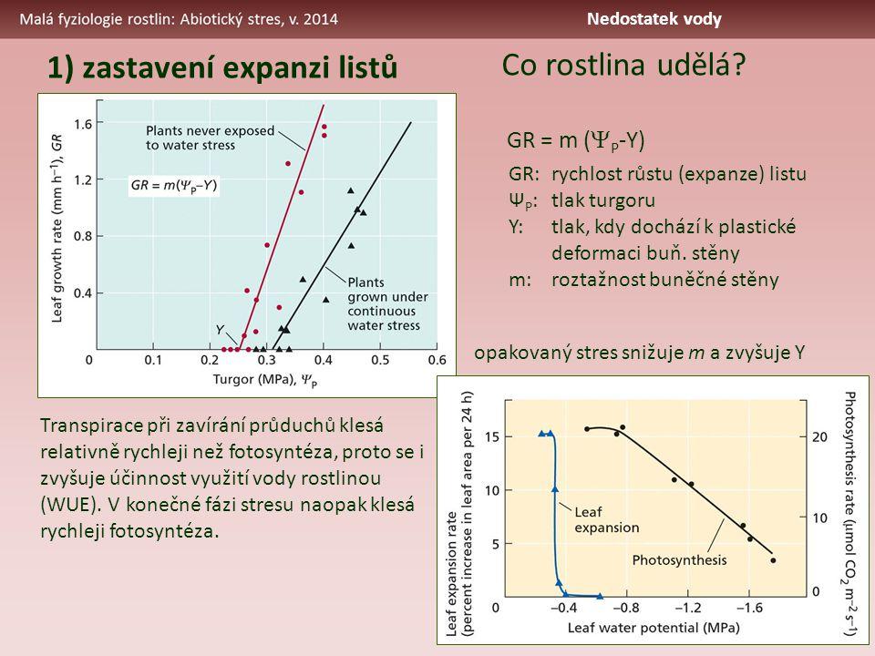 1) zastavení expanzi listů GR = m (  P -Y) GR:rychlost růstu (expanze) listu Ψ P :tlak turgoru Y:tlak, kdy dochází k plastické deformaci buň.