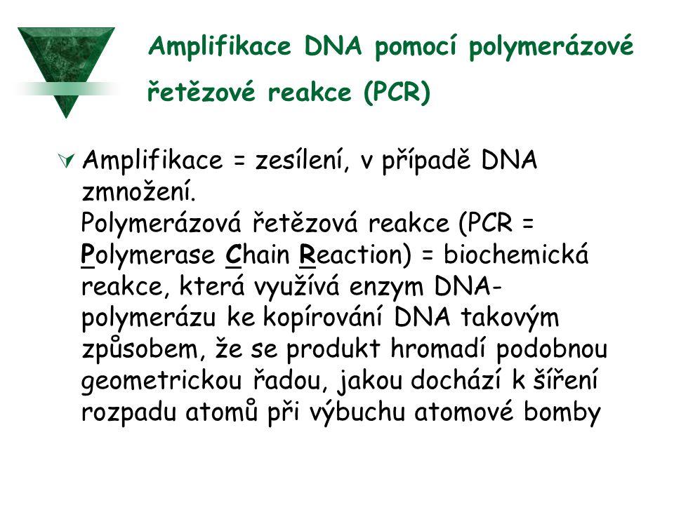 Amplifikace DNA pomocí polymerázové řetězové reakce (PCR)  Amplifikace = zesílení, v případě DNA zmnožení. Polymerázová řetězová reakce (PCR = Polyme