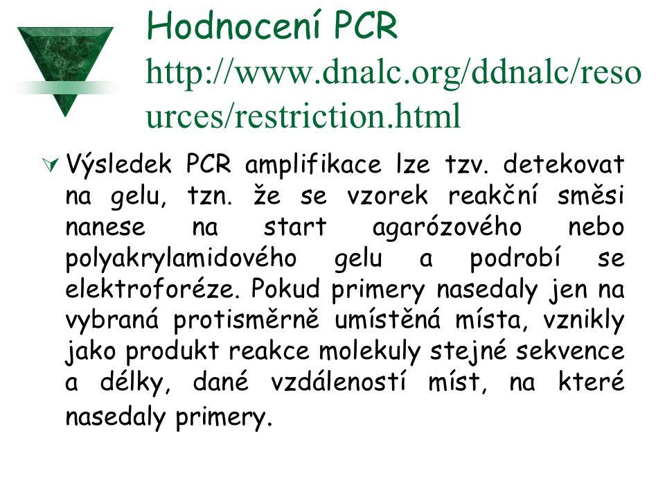 Hodnocení PCR http://www.dnalc.org/ddnalc/reso urces/restriction.html  Výsledek PCR amplifikace lze tzv. detekovat na gelu, tzn. že se vzorek reakční