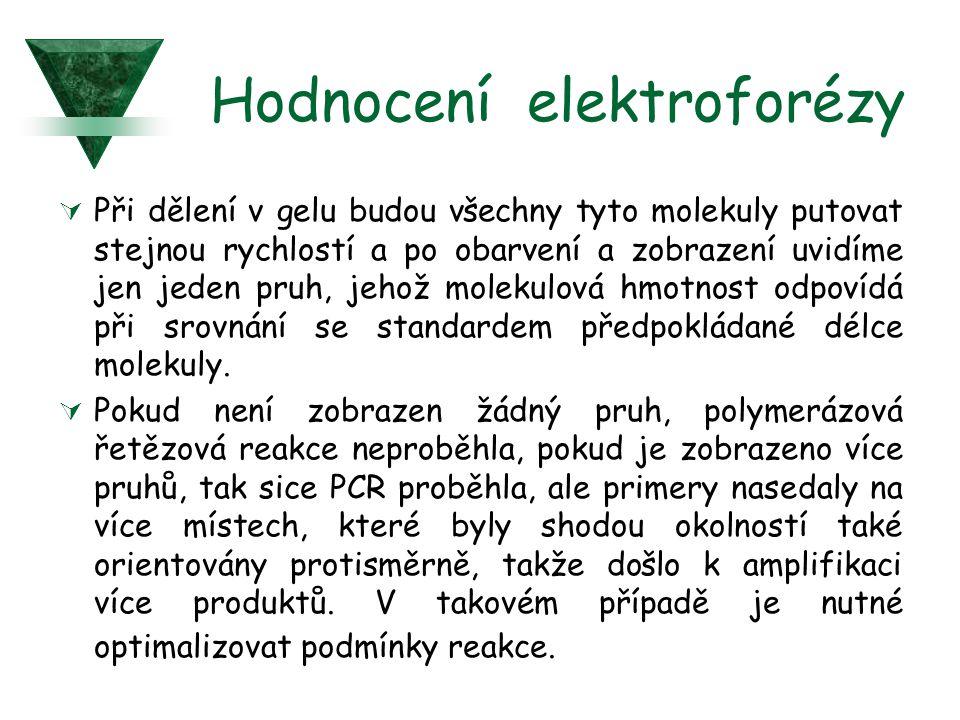 Hodnocení elektroforézy  Při dělení v gelu budou všechny tyto molekuly putovat stejnou rychlostí a po obarvení a zobrazení uvidíme jen jeden pruh, jehož molekulová hmotnost odpovídá při srovnání se standardem předpokládané délce molekuly.
