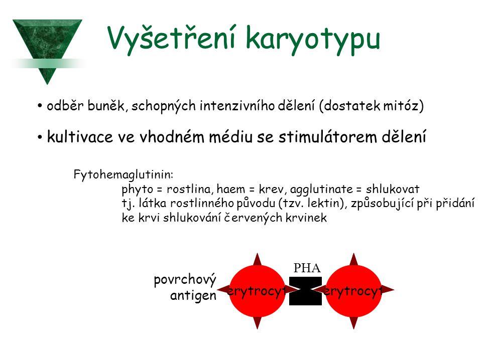 Vyšetření karyotypu odběr buněk, schopných intenzivního dělení (dostatek mitóz) kultivace ve vhodném médiu se stimulátorem dělení Fytohemaglutinin: phyto = rostlina, haem = krev, agglutinate = shlukovat tj.
