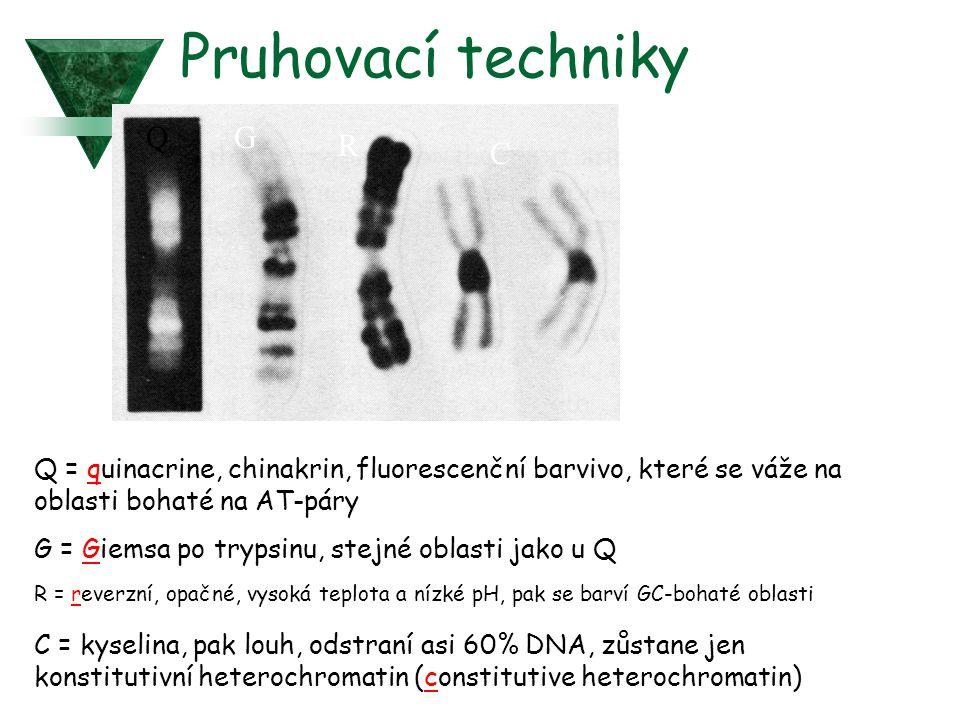 Pruhovací techniky QG R C Q = quinacrine, chinakrin, fluorescenční barvivo, které se váže na oblasti bohaté na AT-páry G = Giemsa po trypsinu, stejné oblasti jako u Q R = reverzní, opačné, vysoká teplota a nízké pH, pak se barví GC-bohaté oblasti C = kyselina, pak louh, odstraní asi 60% DNA, zůstane jen konstitutivní heterochromatin (constitutive heterochromatin)
