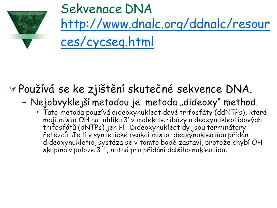 Sekvenace DNA http://www.dnalc.org/ddnalc/resour ces/cycseq.html http://www.dnalc.org/ddnalc/resour ces/cycseq.html  Používá se ke zjištění skutečné sekvence DNA.