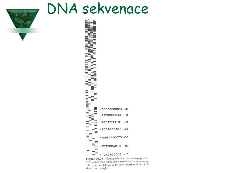 DNA sekvenace