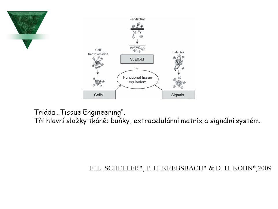 """Triáda """"Tissue Engineering"""". Tři hlavní složky tkáně: buňky, extracelulární matrix a signální systém. E. L. SCHELLER*, P. H. KREBSBACH* & D. H. KOHN*,"""