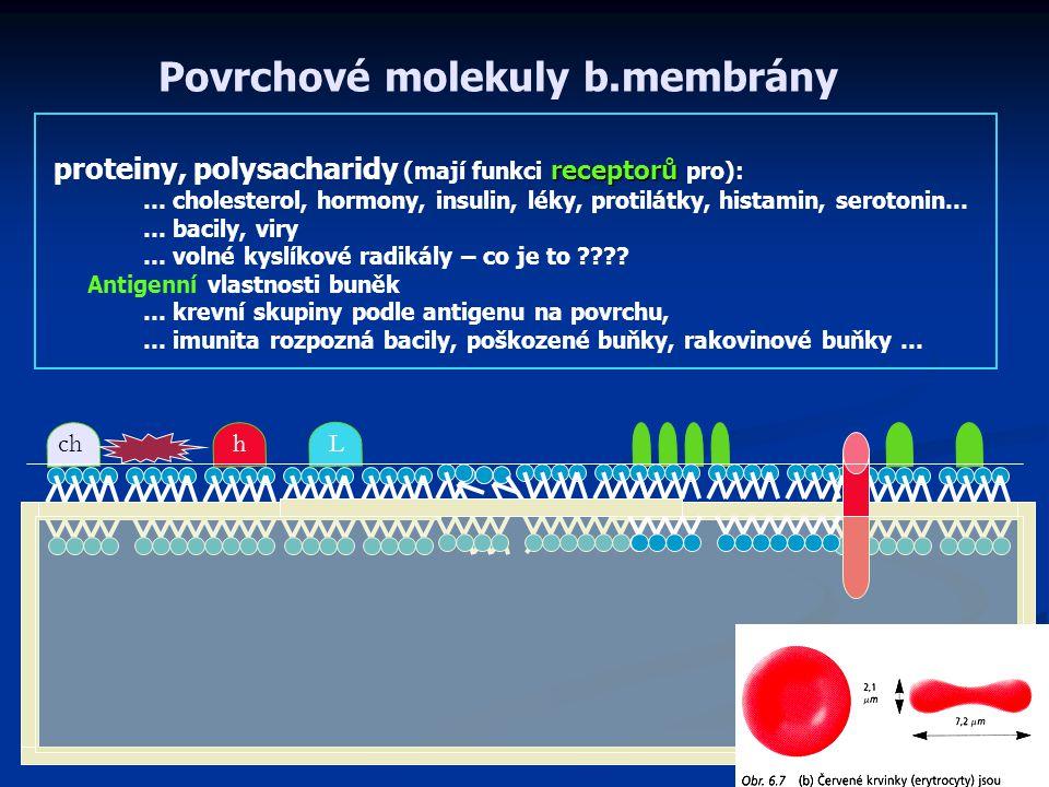 Povrchové molekuly b.membrány receptorů proteiny, polysacharidy (mají funkci receptorů pro): … cholesterol, hormony, insulin, léky, protilátky, histamin, serotonin… … bacily, viry … volné kyslíkové radikály – co je to ???.
