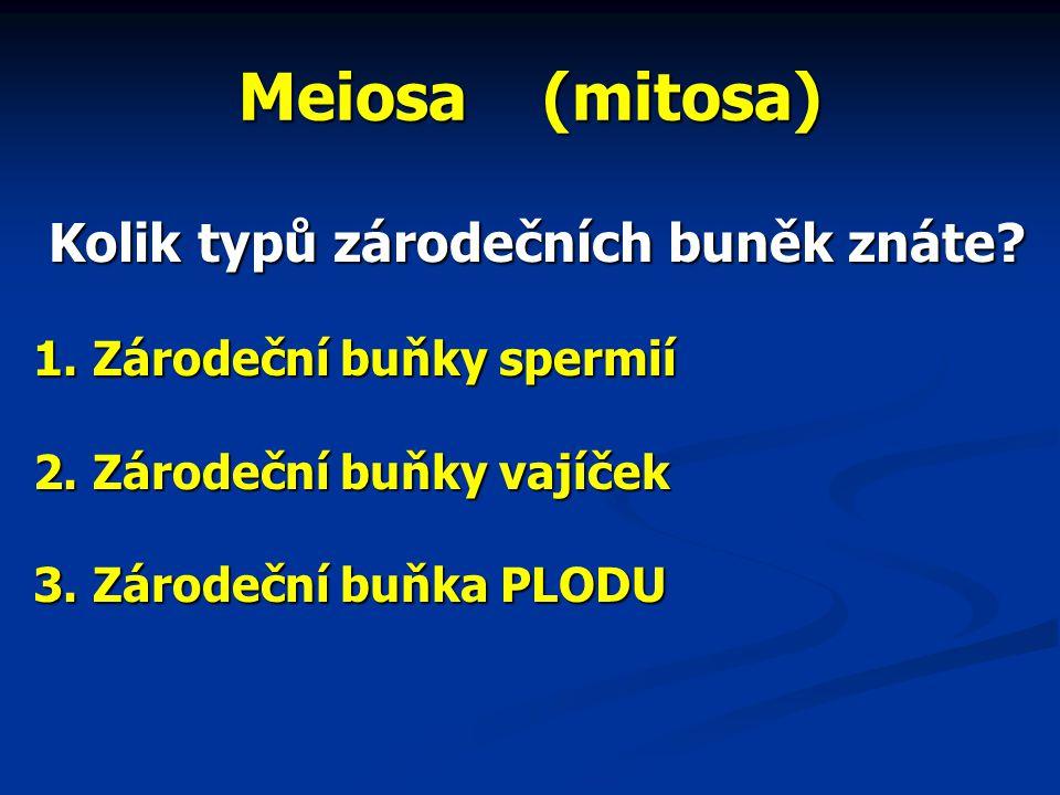 Meiosa (mitosa) Kolik typů zárodečních buněk znáte.
