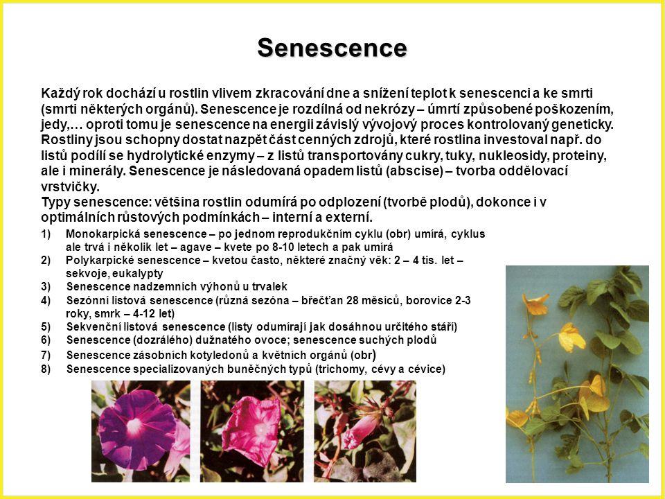 Senescence Každý rok dochází u rostlin vlivem zkracování dne a snížení teplot k senescenci a ke smrti (smrti některých orgánů). Senescence je rozdílná
