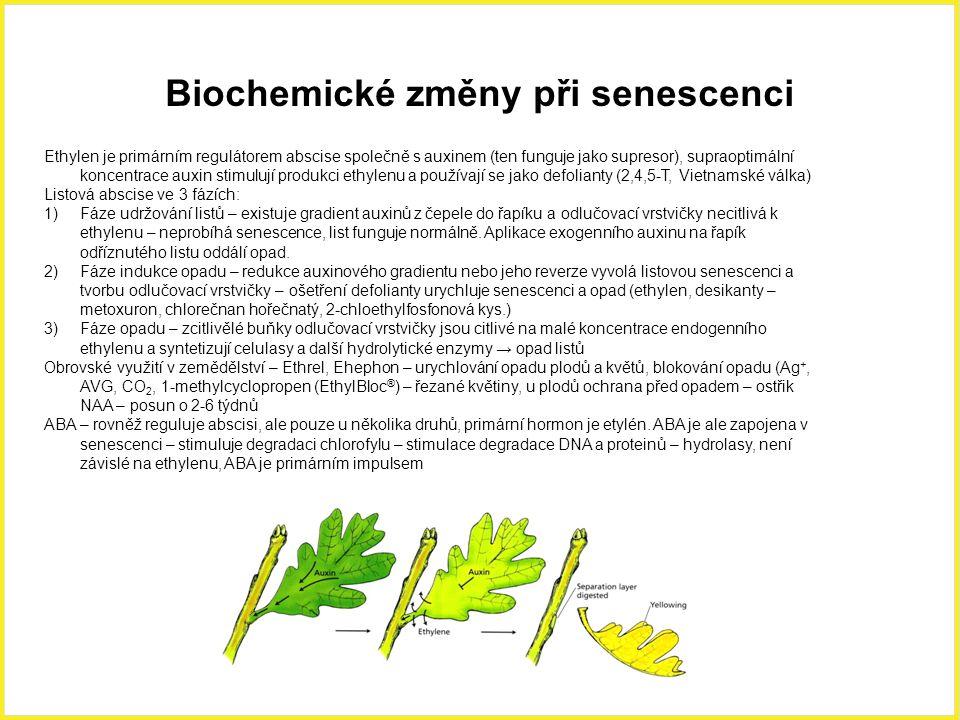 Biochemické změny při senescenci Ethylen je primárním regulátorem abscise společně s auxinem (ten funguje jako supresor), supraoptimální koncentrace a