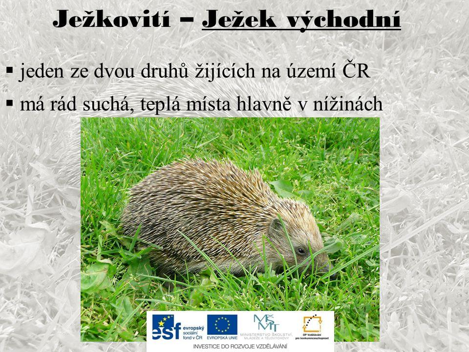 Ježkovití – Ježek východní  jeden ze dvou druhů žijících na území ČR  má rád suchá, teplá místa hlavně v nížinách
