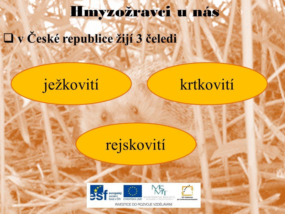 Hmyzožravci u nás  v České republice žijí 3 čeledi ježkovitíkrtkovití rejskovití