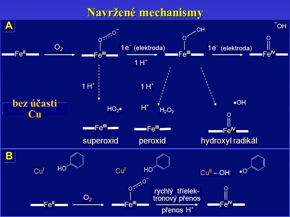 Navržené mechanismy B I Cu I II Fe II III Fe III IV Fe IV O2O2 I Cu I II Cu II – OH přenos H + rychlý tříelek- tronový přenos A II Fe II III Fe III O2O2 1 H+1 H+ IV Fe IV – – OH 1 H+1 H+ 1 H+1 H+ HO 2  H2O2H2O2  OH III Fe III IV Fe IV superoxid peroxid hydroxyl radikál e – 1 e – (elektroda) H+H+ bez účasti Cu