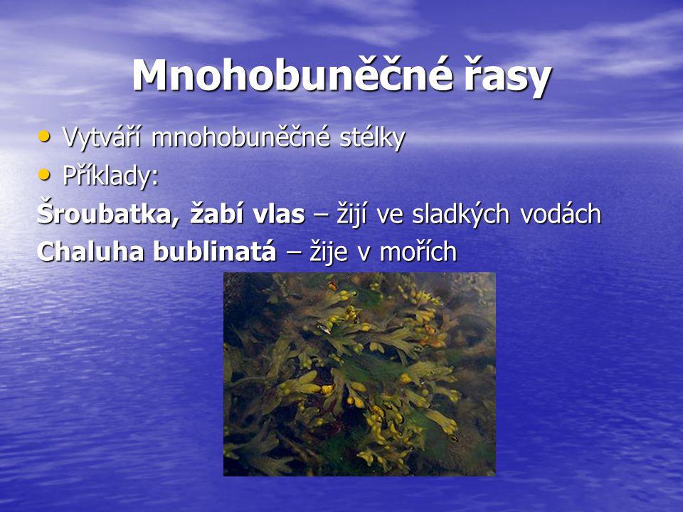 Mnohobuněčné řasy Vytváří mnohobuněčné stélky Vytváří mnohobuněčné stélky Příklady: Příklady: Šroubatka, žabí vlas – žijí ve sladkých vodách Chaluha b