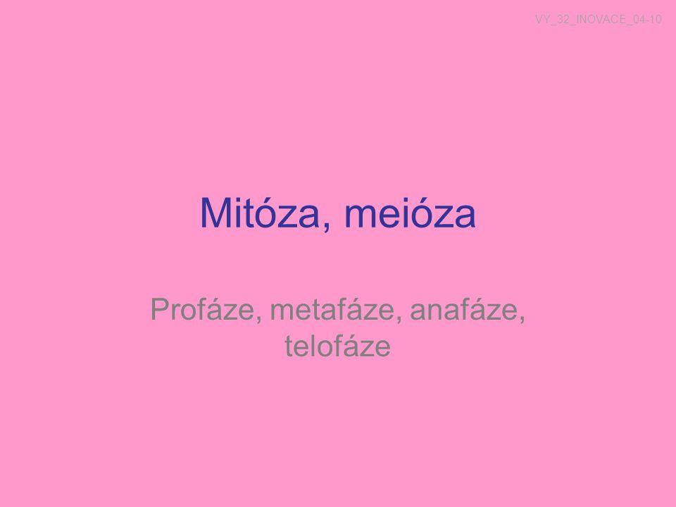 Mitoza KARYOKINEZE (dělení jádra) Profáze Metafáze Anafáze Telofáze CYTOKINEZE (dělení cytoplazmy)