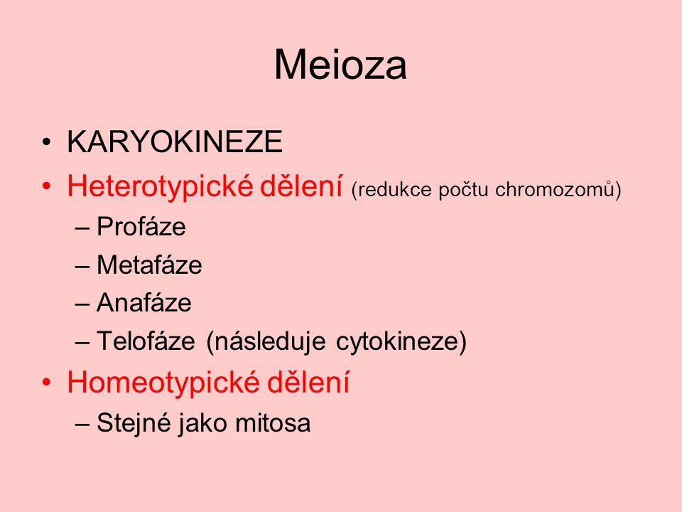 Heterotypické dělení - profáze Leptotene (spiralizace DNA) Zygotene (homologní chromozomy spojí) Pachytene (crossing-over) Diplotene Diakineze