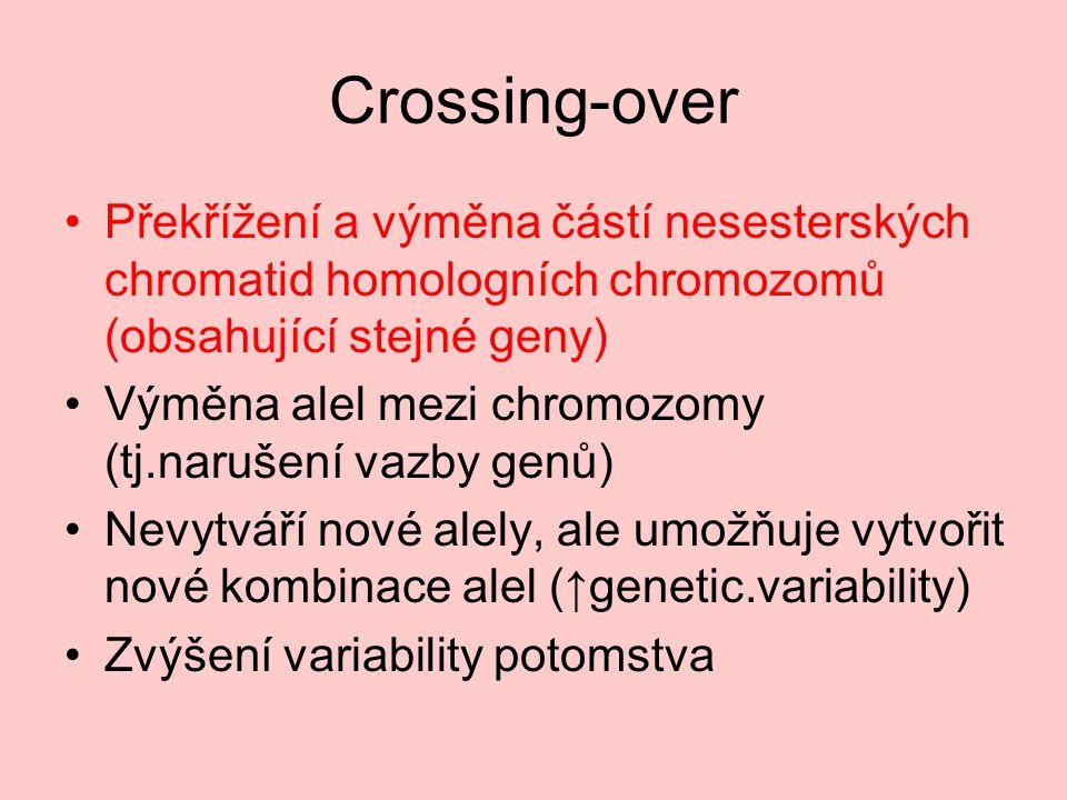 Crossing-over Překřížení a výměna částí nesesterských chromatid homologních chromozomů (obsahující stejné geny) Výměna alel mezi chromozomy (tj.narušení vazby genů) Nevytváří nové alely, ale umožňuje vytvořit nové kombinace alel (↑genetic.variability) Zvýšení variability potomstva