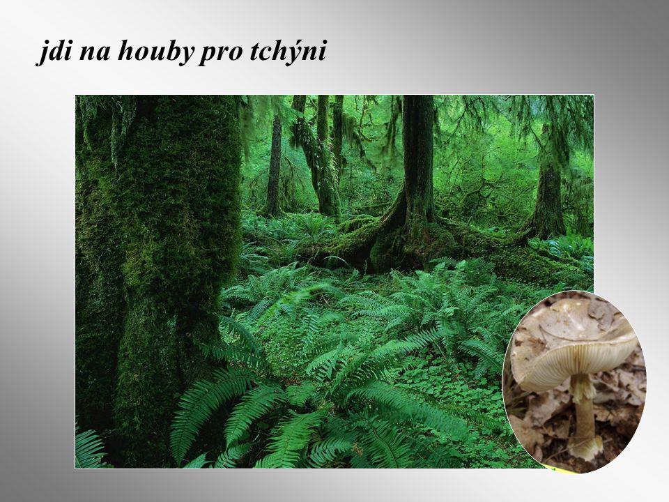 jdi na houby pro tchýni