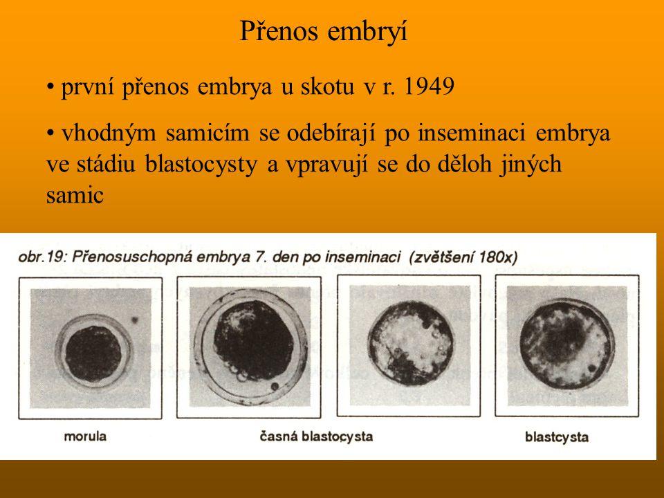 Přenos embryí první přenos embrya u skotu v r. 1949 vhodným samicím se odebírají po inseminaci embrya ve stádiu blastocysty a vpravují se do děloh jin