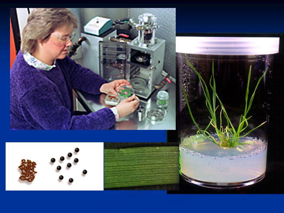 K čemu jsou genetické modifikace rostlin.
