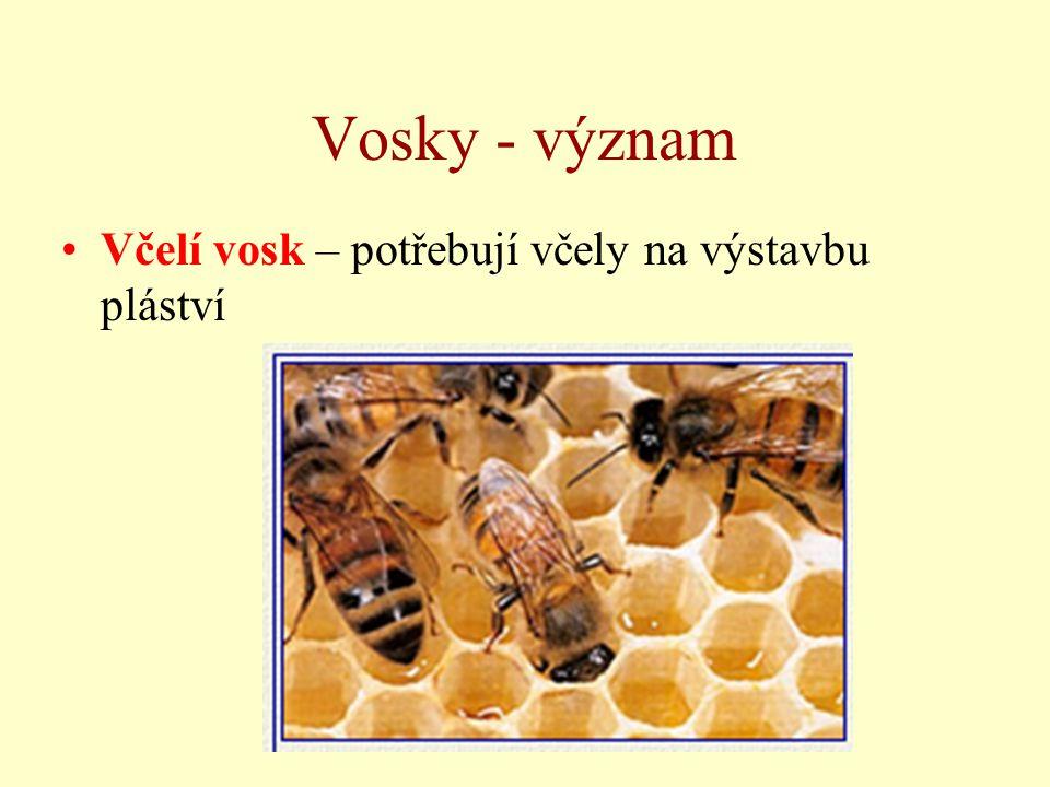 Vosky - význam Včelí vosk – potřebují včely na výstavbu pláství