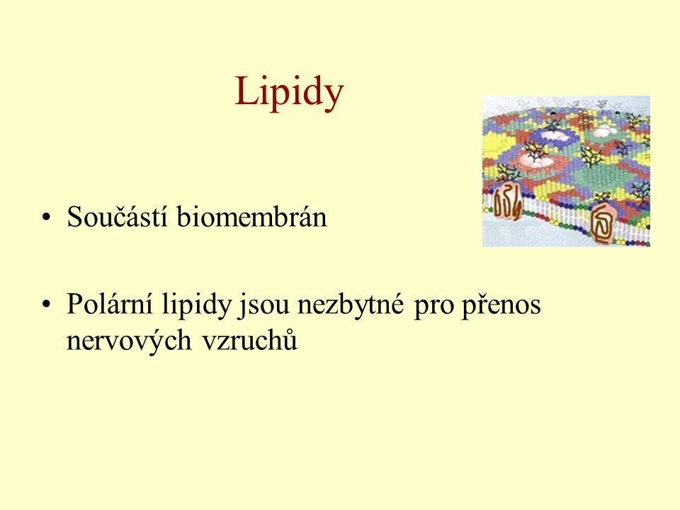 Lipidy Součástí biomembrán Polární lipidy jsou nezbytné pro přenos nervových vzruchů