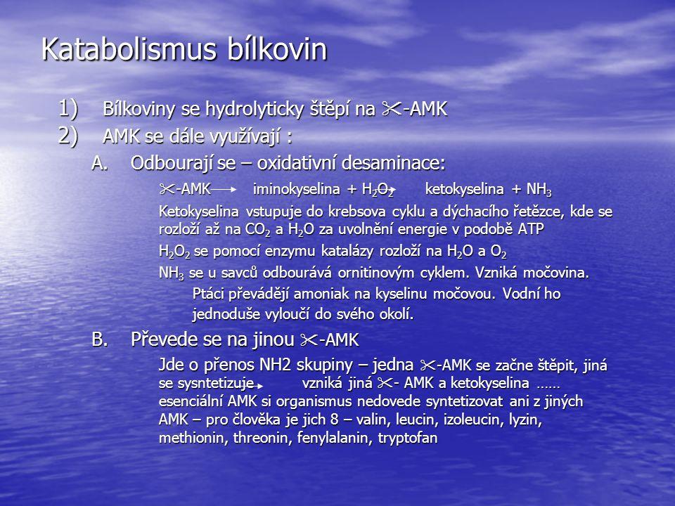 Katabolismus bílkovin 1) Bílkoviny se hydrolyticky štěpí na  -AMK 2) AMK se dále využívají : A.Odbourají se – oxidativní desaminace:  -AMK iminokyse
