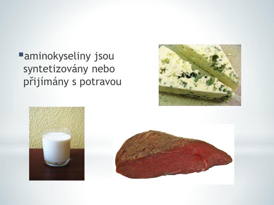  aminokyseliny jsou syntetizovány nebo přijímány s potravou