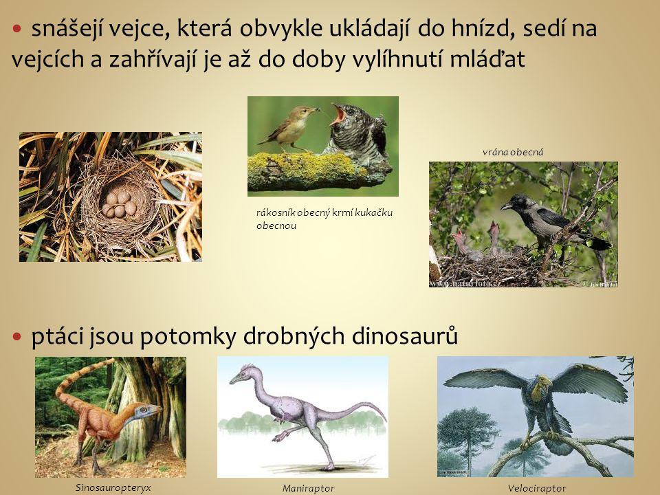 jsou dvojnozí vyznačují se peřím, křídly a zobákem komunikují pomocí vizuálních signálů, voláním a zpěvem čáp bílý pěnkava obecná poštolka obecná