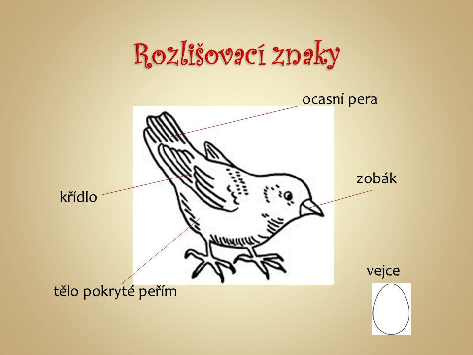 snášejí vejce, která obvykle ukládají do hnízd, sedí na vejcích a zahřívají je až do doby vylíhnutí mláďat ptáci jsou potomky drobných dinosaurů Sinos